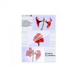 OLYMPIA Paquet de 50 Pochettes de plastification DIN A3 125 micron